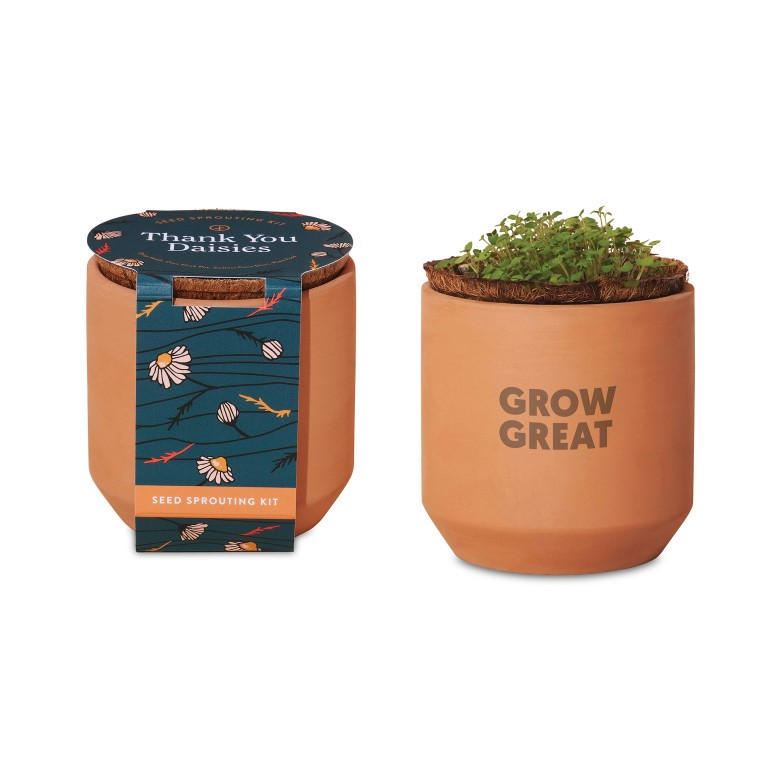 terracotta pots with daisies growing
